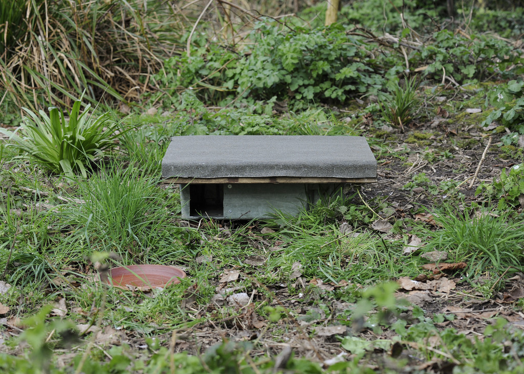 ...and hedgehog feeding station, made by Ken and Ruth